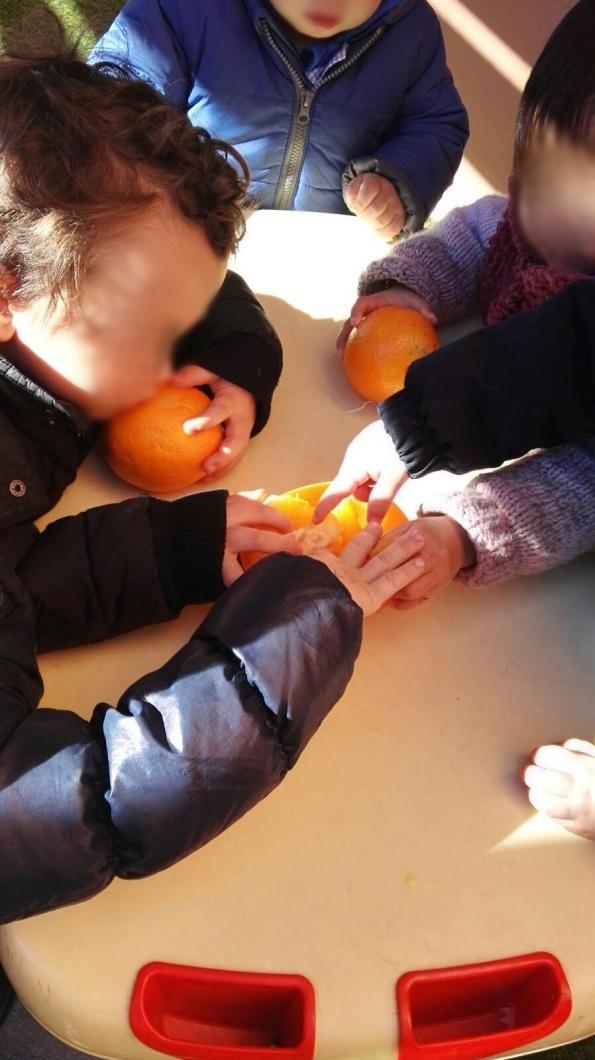 naranja y limon (20)